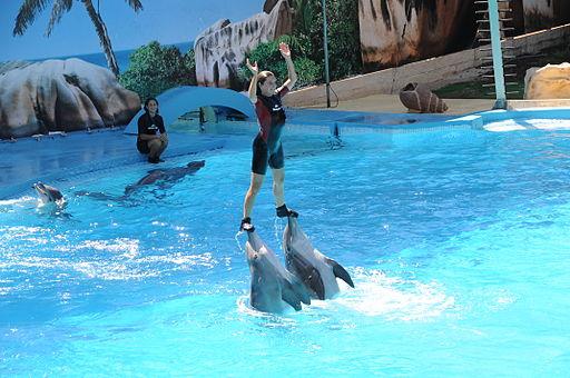 Gilao Tours Zoo Marine